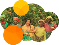 African Mango - Obstbau in Kamerun